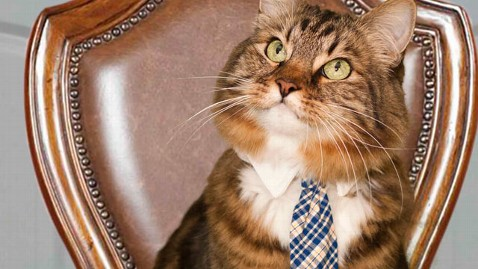ap hank for senate cat thg 120228 wblog A Pet Prospect for US Senate Gives Va. Voters Pause