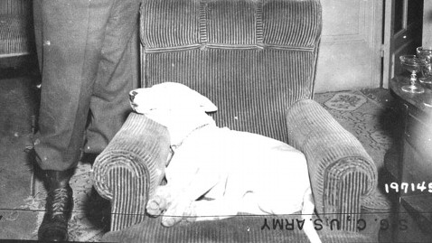 gty dog willie kb 121128 wblog Dogs: The Furry, Faithful Secret Weapons of WWII