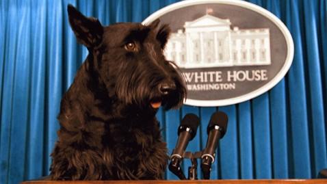 George Bush Dog Barney