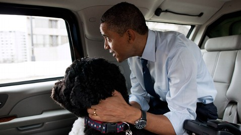ht president barack obama dog bo ll 120130 wblog Dogs Against Romney? Democrats Say Unleash the Hound!