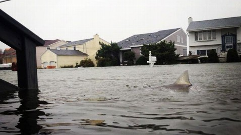 Gregory Michael facebook wblog Sharks in Floodwaters? Fake Hurricane Sandy Pics, but Still Possible