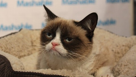 abc SXSW2 grumpy cat jt 130309 wblog Photos: 7 of the Biggest Celebrity Pets Around