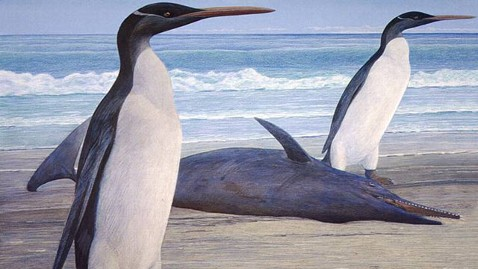 ap giant penguin tk 120229 wblog Extinct Giant Penguin Reconstructed by Scientists