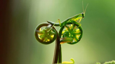 cn praying mantis bike wy main 120412 wblog Nightline Daily Line, April 13: Kindergarten Confidential