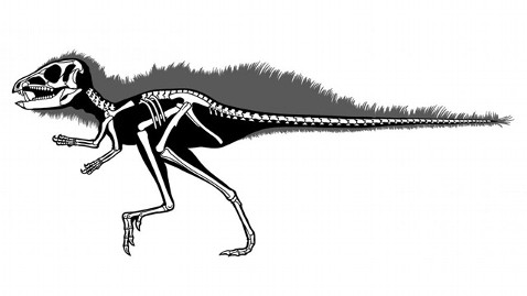 ht Heterodontosaurids nt 121003 wblog Tiny Dino With Fangs IDed 30 Years After Discovery