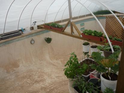 Family Grows Garden In Backyard Swimming Pool Abc News