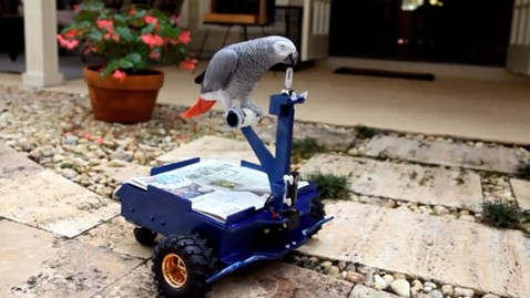 ht bird buggy parrot nt 130114 wblog Florida Man Builds Mini Car for His Pet Parrot