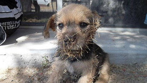 ht cactus jack before ll 120426 wblog Cactus Patch Puppy Rescued and Adopted
