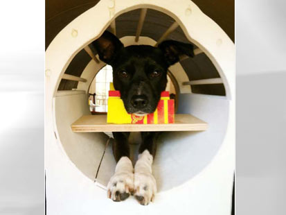 ht dog in mri machine thg 120510 main Doggie MRIs: What Is Your Dog Thinking?