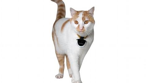 ht dog tek jp 121204 wblog Gadget Gift Guide: Picks for Pet Lovers