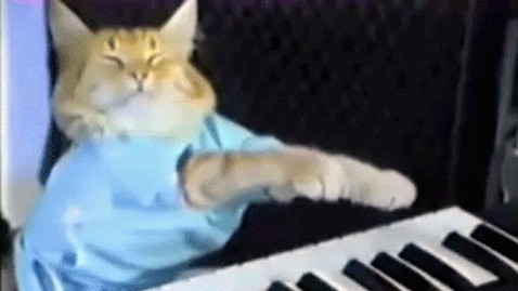 ht fatso keyboard cat ll 130503 wblog Warner Brothers Copycatted YouTube Images, Suit Claims