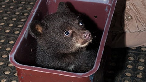 ht orphaned bear dm 120621 wblog Orphaned Baby Bear Gets Check up