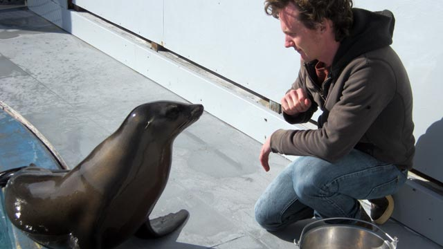 Watch: Ronan the Sea Lion Rocks the Beat
