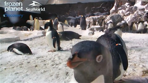 ht seaworld penguin cam ll 120309 wblog Penguin Cam Provides Non Stop Video