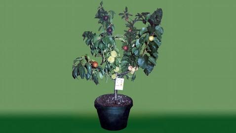The Fruit Salad Tree Abc News