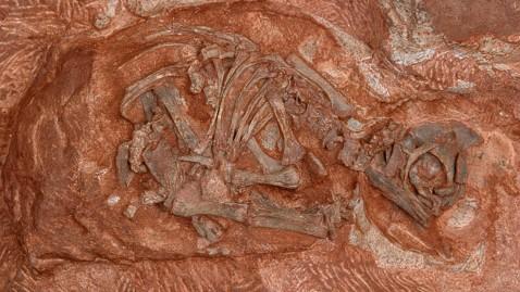 nc ht dinosaur nest tk 120124 wblog Ancient Dino Nursery Reveals Mothers Love in Cretaceous Period
