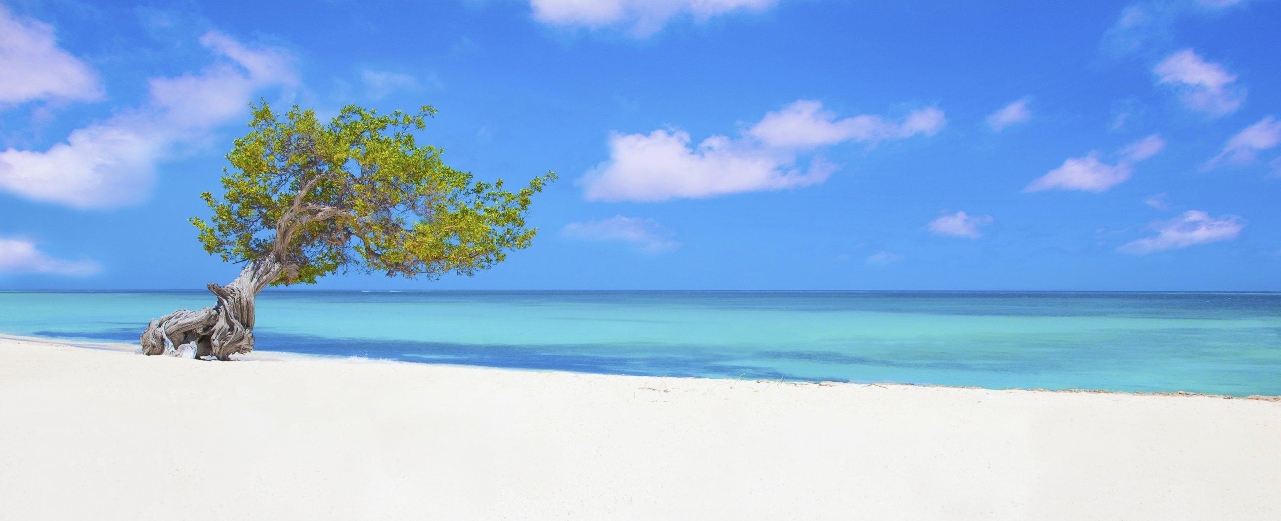 Aruba videos at abc news video archive at for Rachel s palm beach