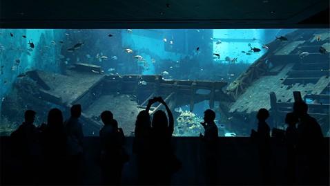 ap singapore marine life park ll 121203 wblog Worlds Largest Aquarium Opens in Singapore