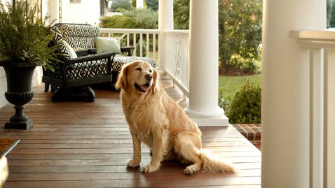 gty dog on porch thg 120409 wblog A Vacation Home for the Family Dog
