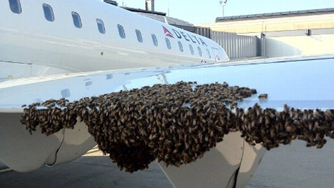 ht bees swarm plane stephen repasky jt 120803 wblog Thousands of Bees Delay Pittsburgh Flight