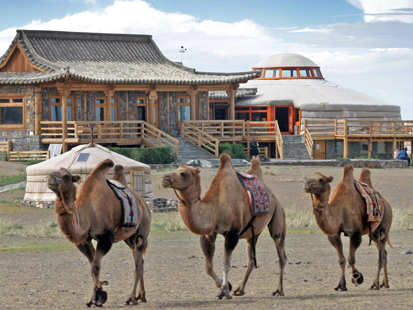 Bactrian Camels in Front of the Lodge