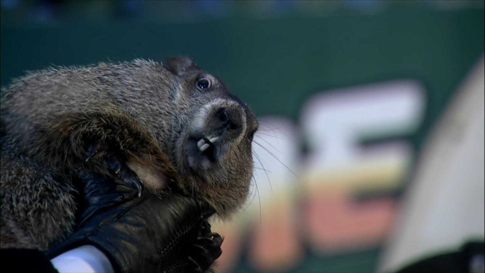 Uncategorized Groundhog Day Videos groundhog day video facts