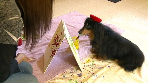 abc dog artist jp 120906 wblog Blind Pet Dachshund Paints, Saves Fellow Rescue Dogs With Artwork