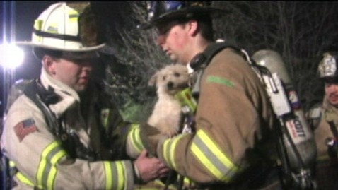 abc firefighter dog rescue jef 120403 wblog New Jersey Firefighters Rescue 20 Dogs From Burning Home