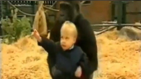 abc gma baby3 gorilla jt 120916 wblog Video: Toddler Plays With Gorilla