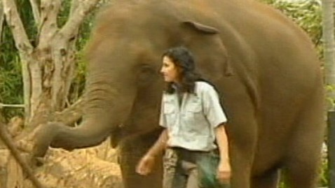 abc gma elephant 2 jt 121021 wblog Australian Zoo Keeper Stable After Elephant Attack