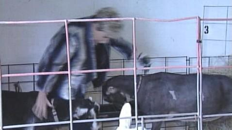 abc goat butt 130125 wblog Goat Head Butts Florida TV News Reporter