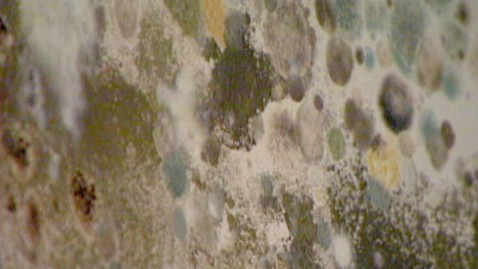 This Is An Example Of House Mold