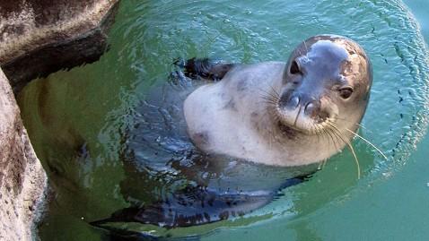ap Hawaiian Monk Seal 2 jt 120107 wblog Endangered Seals Bludgeoned to Death in Hawaii