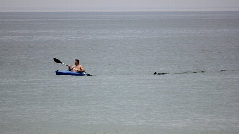 ap cape cod shark jt 120708 wblog Great White Shark: Cape Cod Beach Reopens After Sighting
