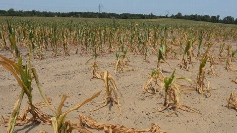ap dought indiana corn kb 120705 wblog Sweltering Heat May Wreak Havoc on Corn Crops