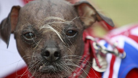 ap ugly dog contest chinese crested lt 120623 wblog Mugly: Meet the Worlds Ugliest Dog of 2012