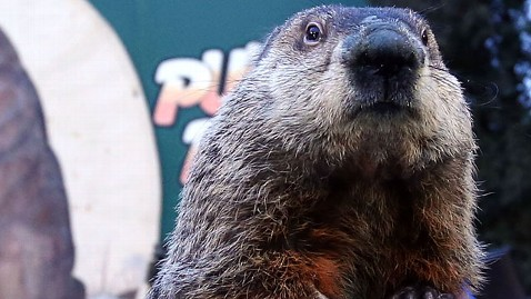 gty Punxsutawney Phil groundhog thg 130322 wblog Cold Prosecutor Indicts Punxsutawney Phil for Fraud