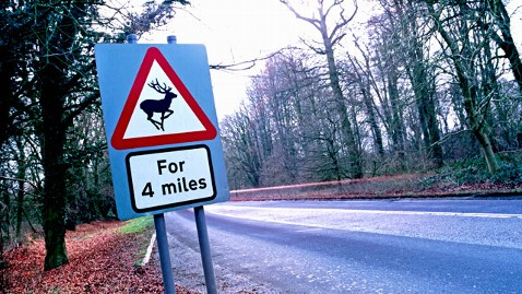 gty deer crossing road sign jt 121020 wblog Radio Caller Complains About Inconsiderate Deer