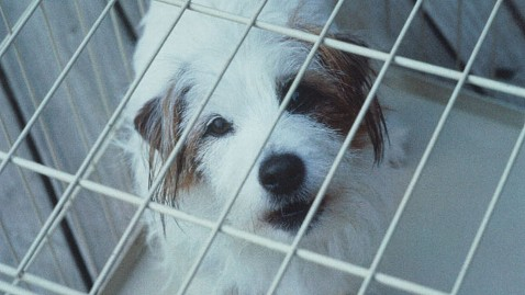 gty dog caged jt 120121 wblog States Look to Establish Online Animal Abuser Registries