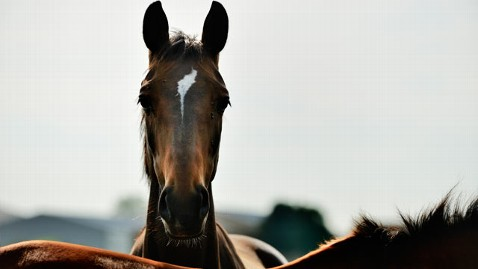 gty horse slaughter us nt 130301 wblog Save the Horses! Three Lawmakers Will Try to Ban Slaughter for Food