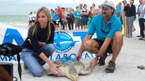 ht Johnny Turtle nt 111228 wblog Johnny The Turtle Is Released After 10K Mile Journey
