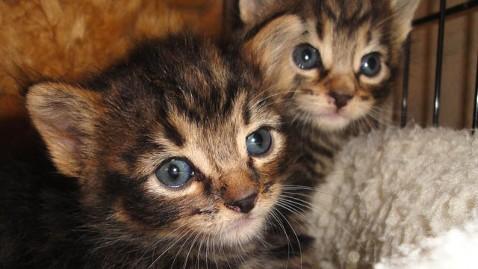 ht bag kittens dm 111207 wblog Iowa Dog Rescues Kittens Left to Die