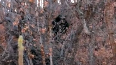 ht bigfoot jef 121108 wblog Alleged Big Foot Sighting in Utah Goes Viral