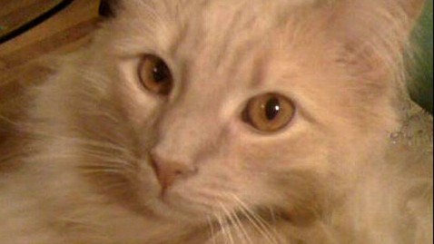 ht cat missing jfk thg 110830 wblog Jack the Cat Dies From Wounds
