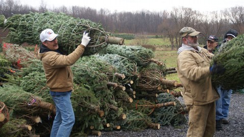 Growers Seek Help Getting Christmas Trees To Sandy Victims Abc News