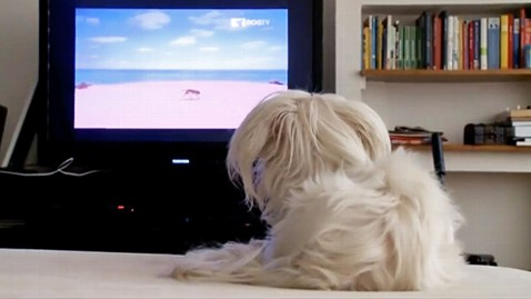 ht dog tv ll 120214 wblog Will DOGTV Turn Your Pooch Into a Couch Pet ato?