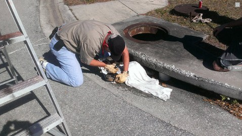 ht florida alligator rescue jt 130209 wblog Alligator Stuck in Storm Drain Freed