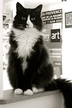 ht henri existential cat 1 ll 121024 vblog Henri the Cat Goes Viral, Turns Profit in the Name of Art