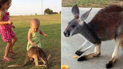ht missing kangaroo nt 121127 wblog Family Offers $1,000 Reward For Lost Kangaroo