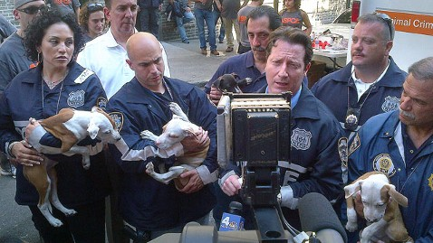 ht nypd puppies dm 120621 wblog 47 Pit Bulls Rescued From Alleged Fighting Ring